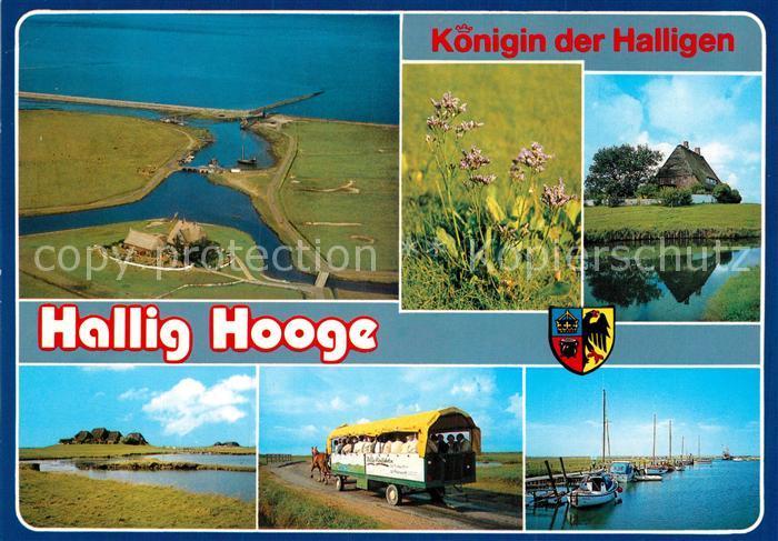 AK / Ansichtskarte Hallig Hooge Landschaftspanorama Pferdewagen Hafen Natur Koenigin der Halligen Kat. Hooge