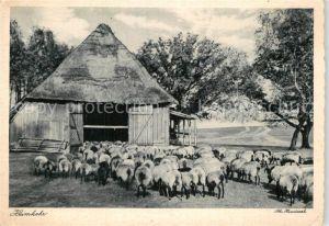 AK / Ansichtskarte Schafe Schafstall Heimkehr  Kat. Tiere
