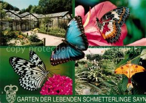 AK / Ansichtskarte Schmetterlinge Garten der lebenden Schmetterlinge Sayn Spitzenfluegel Kometenfalter  Kat. Tiere