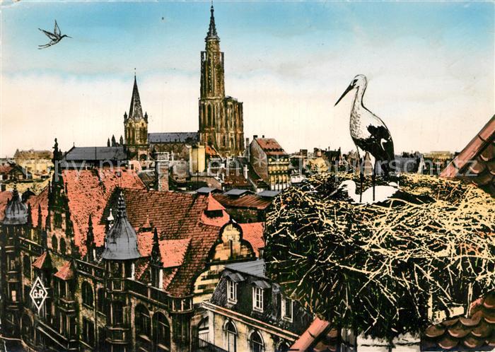AK / Ansichtskarte Strasbourg Alsace Cigognes d Alsace Cathedrale Kat. Strasbourg