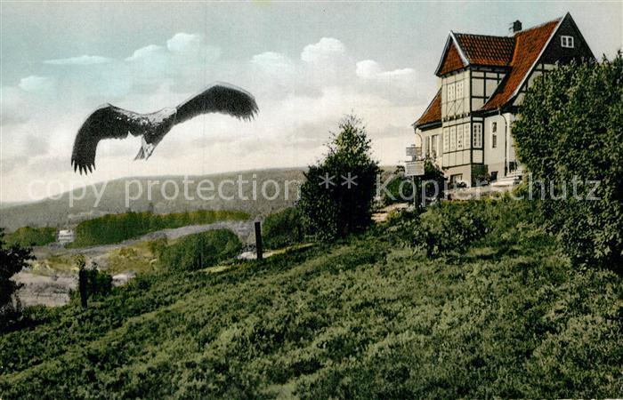 AK / Ansichtskarte Berlebeck Kaiseradler im Anflug zur Warte Kat. Detmold