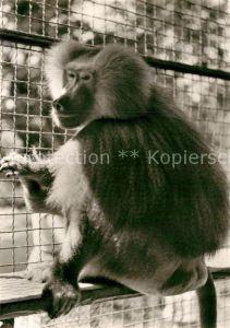 AK / Ansichtskarte Affen Mantelpavian Landau Pfalz Tierpark  Kat. Tiere