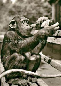 AK / Ansichtskarte Affen Schimpanse Tierpark Landau Pfalz  Kat. Tiere