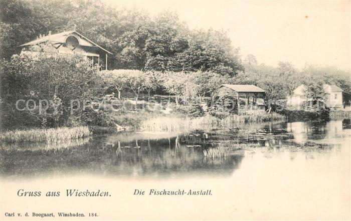 AK / Ansichtskarte Wiesbaden Fischzucht Anstalt Kat. Wiesbaden