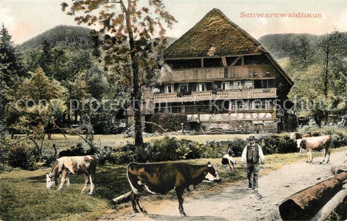 AK / Ansichtskarte Schwarzwald Schwarzwaldhaus Kuehe Kat. Regionales