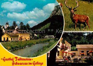 AK / Ansichtskarte Schwarzau Gebirge Gasthaus Falkenstein Kat. Schwarzau im Gebirge