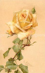 AK / Ansichtskarte Klein Catharina Gelbe Rose Litho Kat. Kuenstlerkarte