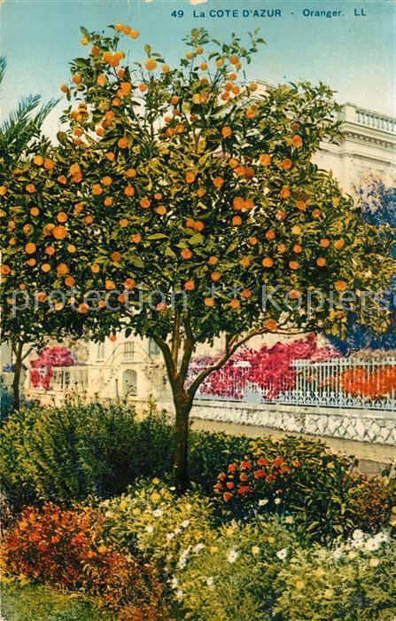 AK / Ansichtskarte Orangen Oranges Cote d Azur  Kat. Landwirtschaft
