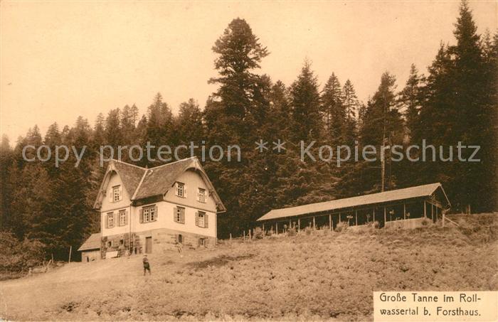 AK / Ansichtskarte Bad Wildbad Grosse Tanne im Rollwassertal beim Forsthaus Kat. Bad Wildbad