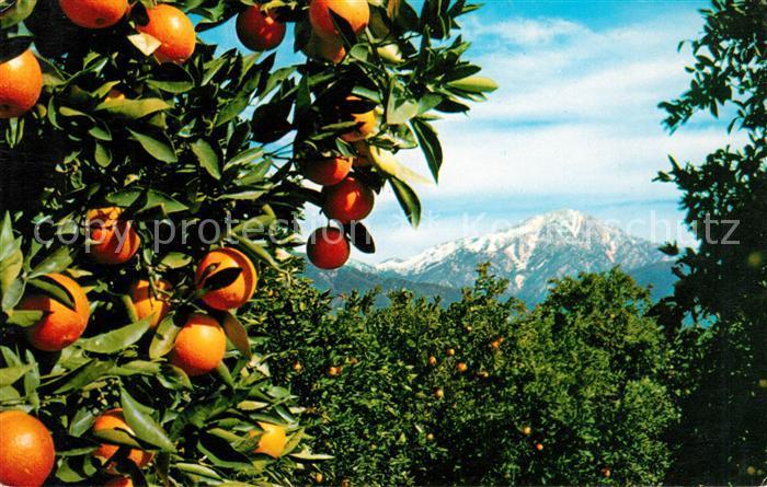 AK / Ansichtskarte Orangen Oranges Southern California  Kat. Landwirtschaft