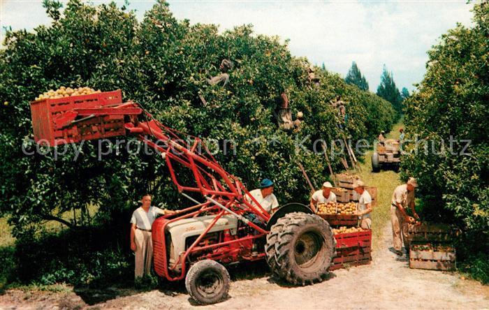 AK / Ansichtskarte Ernte Landwirtschaft Citrus Harvest Florida  Kat. Landwirtschaft