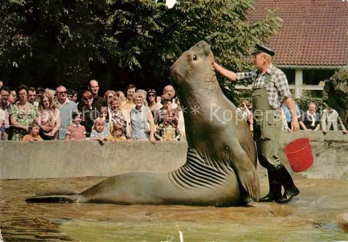 AK / Ansichtskarte Robben Seehunde See Elefantenfuetterung Zoo Berlin Kat. Tiere