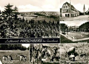 AK / Ansichtskarte Hirschberg Sauerland Rathaus Schwimmbad Tropfsteinhoehle Wild