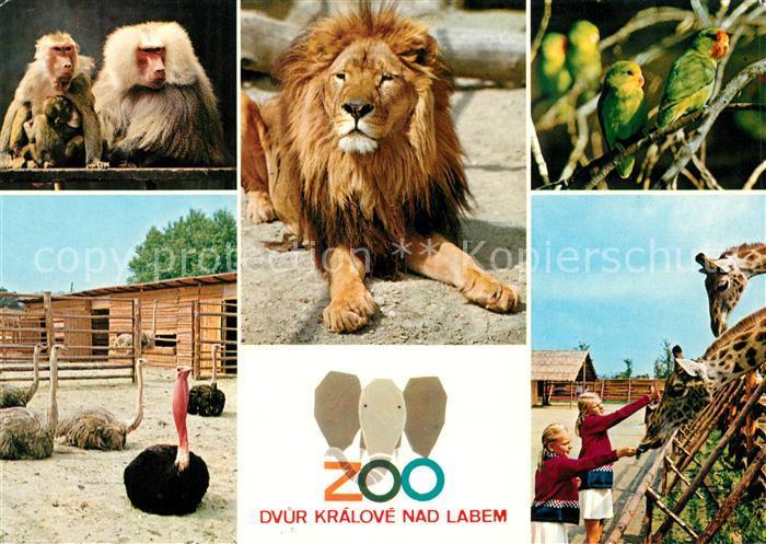 AK / Ansichtskarte Zoo Loewe Affen Giraffen Strauss Dvur Kralove nad Labem Kat. Tiere