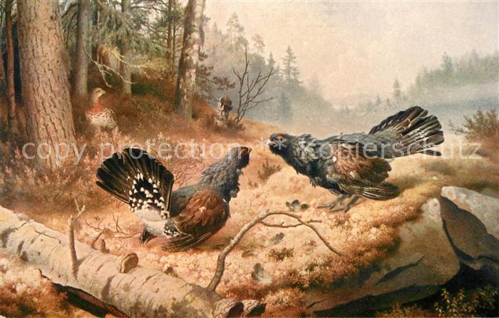 AK / Ansichtskarte Kuenstlerkarte W. v. Wright Streitende Auerhaehne  Kat. Kuenstlerkarte