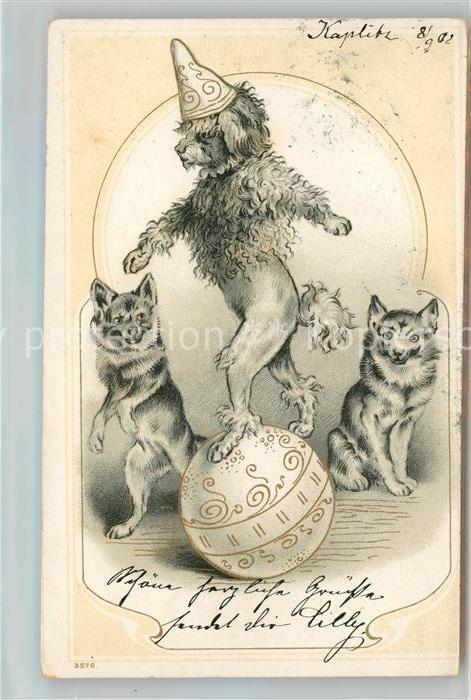AK / Ansichtskarte Zirkus Hunde Litho Kat. Zirkus