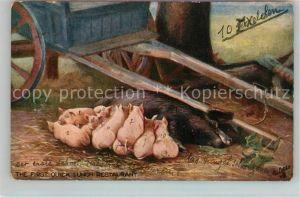 AK / Ansichtskarte Verlag Tucks Oilette Nr. 9397 Schweine  Kat. Verlage