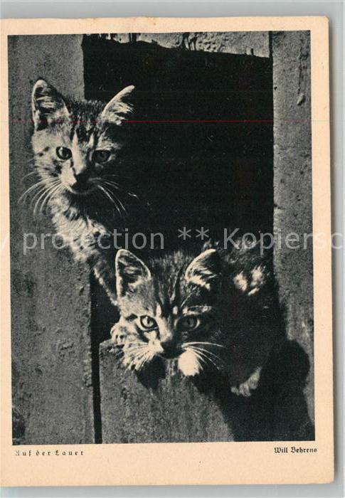 AK / Ansichtskarte Katzen  Kat. Tiere