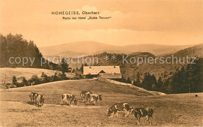 AK / Ansichtskarte Hohegeiss Harz Partie bei Hotel Dicke Tannen Kat. Braunlage