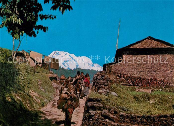 AK / Ansichtskarte Nepal Eselkarawane Kat. Nepal