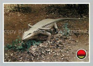AK / Ansichtskarte Dinosaurier Desmatosuchus Saurierpark Kleinwelka Kat. Tiere