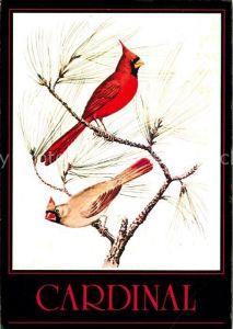 AK / Ansichtskarte Voegel Cardinal  Kat. Tiere