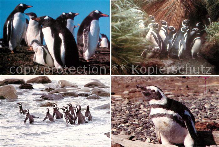 AK / Ansichtskarte Pinguin Magallanes Chile Kat. Tiere