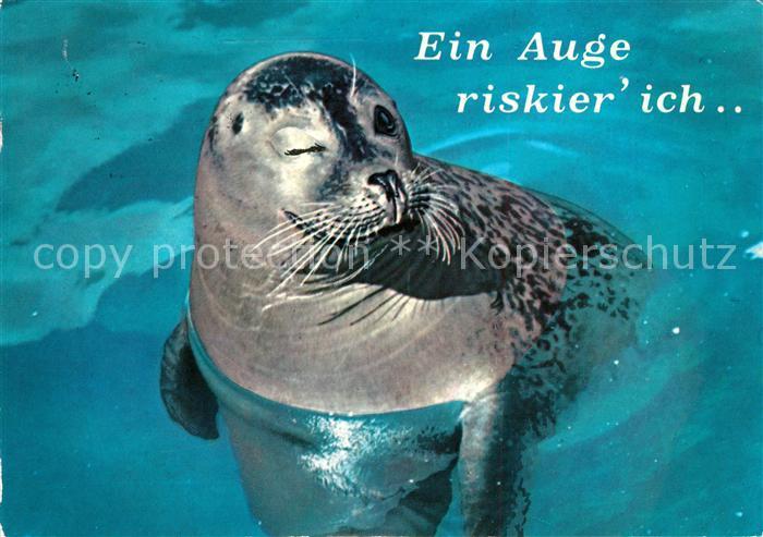 AK / Ansichtskarte Robben Seehunde  Kat. Tiere