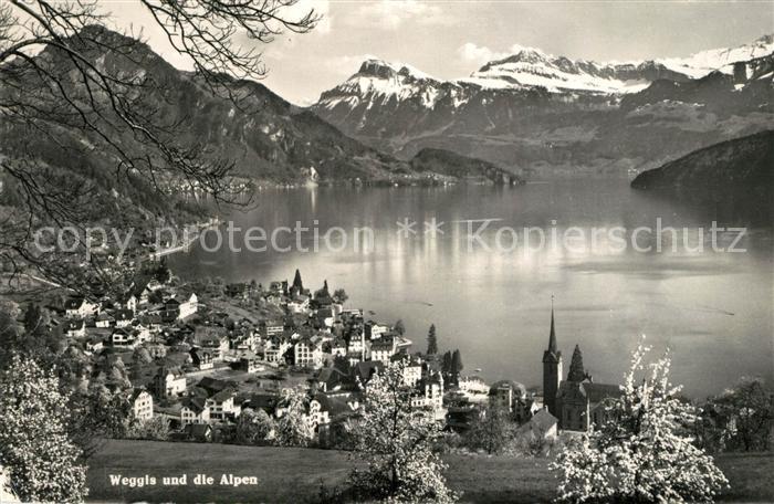 AK / Ansichtskarte Weggis_Vierwaldstaettersee Panorama  Weggis_Vierwaldstaettersee