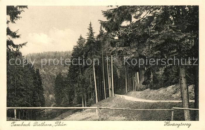 AK / Ansichtskarte Tambach Dietharz Waldpartie Herzogsweg Thueringer Wald Tambach Dietharz