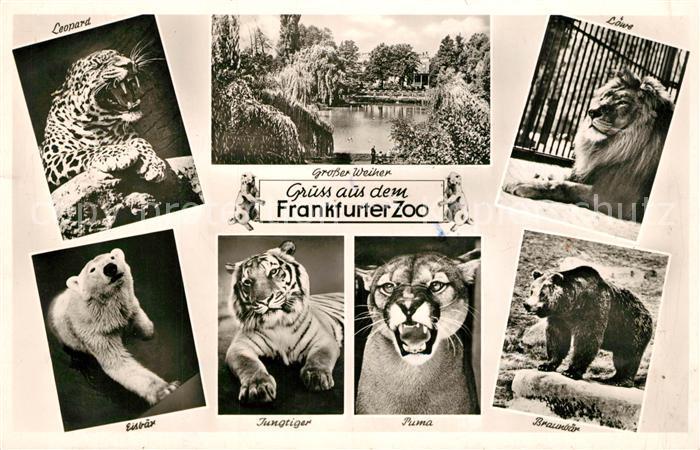 AK / Ansichtskarte Zoo Frankfurt Leopard Loewe Puma Eisbaer Braunbaer  Zoo
