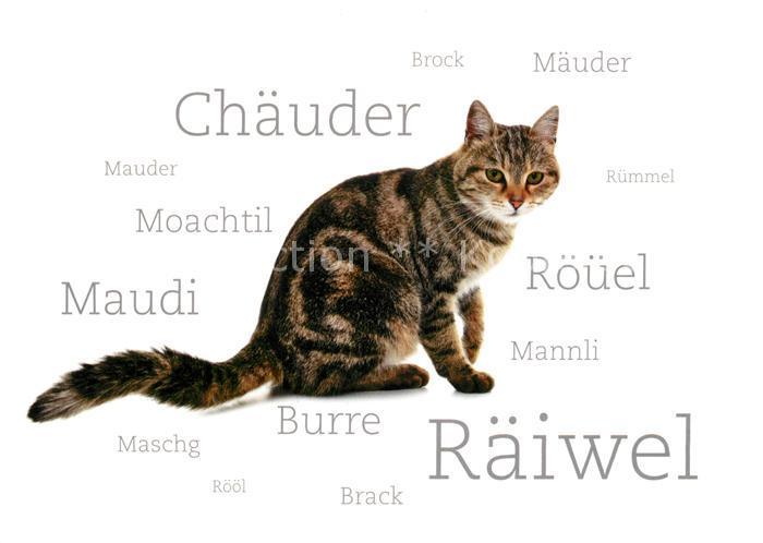 AK / Ansichtskarte Katzen Schweiz  Katzen