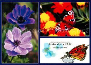 AK / Ansichtskarte Schmetterlinge Landesgartenschau Grossenhain  Schmetterlinge