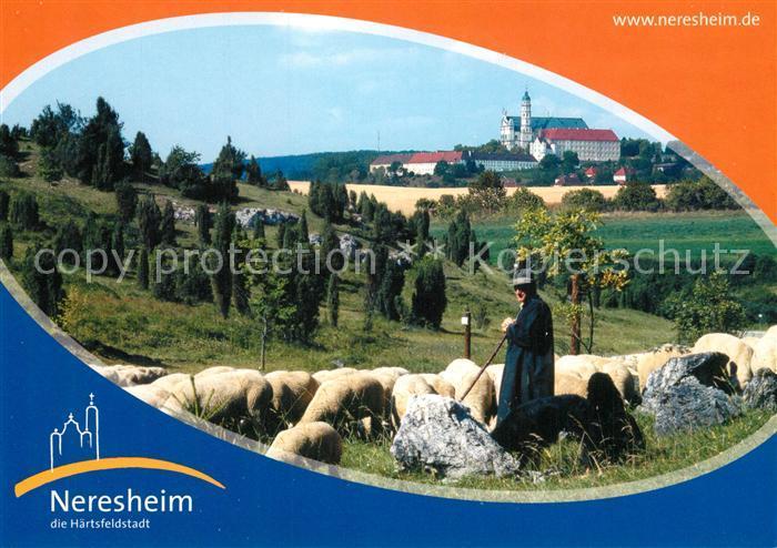 AK / Ansichtskarte Neresheim Haertsfeld Schafherde Hirte Neresheim