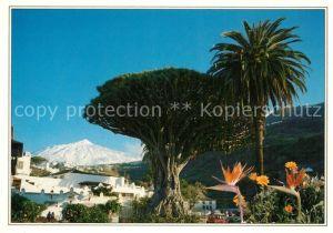 AK / Ansichtskarte Tenerife Drago Milenario El Teide Icod de los Vinos Tenerife