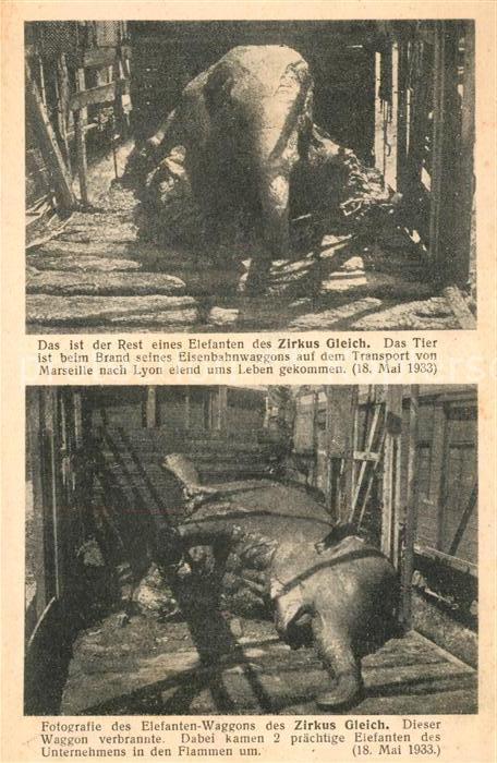 AK / Ansichtskarte Elefant Zirkus Gleich Brand Tod Eisenbahnwagon  Elefant