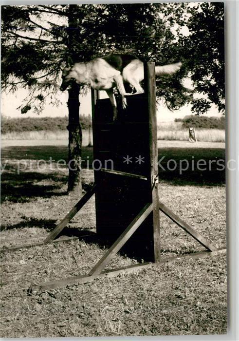 AK / Ansichtskarte Schaeferhunde Wengerohr Polizeischule Schaeferhunde