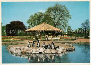 AK / Ansichtskarte Pinguin Internationale Gartenbau Ausstellung Hamburg 1953 Pinguinenteich Pinguin