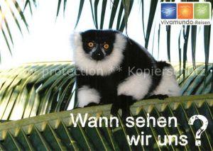 AK / Ansichtskarte Affen Schwarzweisser Vari Vivamundo Reisen  Affen