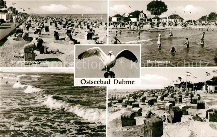 AK / Ansichtskarte Dahme_Ostseebad Strand Moeve Dahme_Ostseebad 0