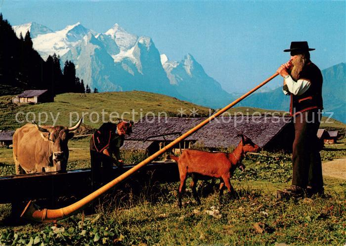 AK / Ansichtskarte Alphorn Alphornblaeser Wetterhoerner Eiger Kuehe Alphorn