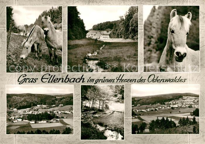 AK / Ansichtskarte Gras Ellenbach Pony Gras Ellenbach