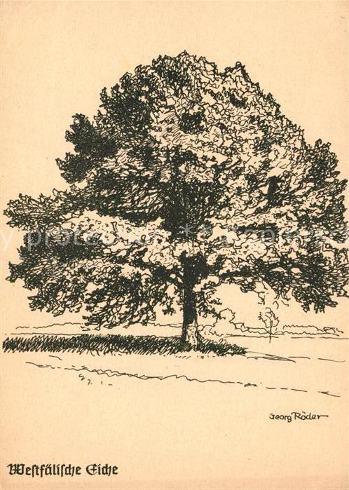 AK / Ansichtskarte Baeume_Trees Westfaelische Eiche Kuenstlerkarte Georg Roeder Baeume Trees