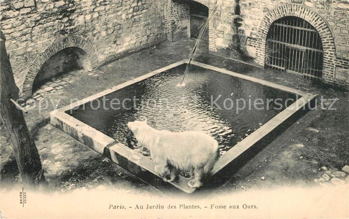 AK / Ansichtskarte Eisbaer Paris Jardin des Plantes Fosse aux Ours  Eisbaer