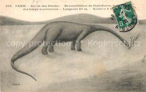 AK / Ansichtskarte Dinosaurier Diplodocus Paris Jardin des Plantes  Dinosaurier