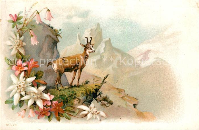 AK / Ansichtskarte Gemse Edelweiss Alpenrosen Litho  Gemse