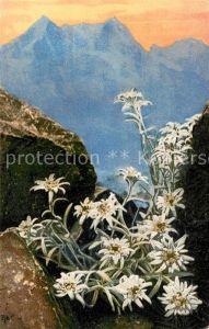 AK / Ansichtskarte Edelweiss Leontopodium Alpinum Edelweiss