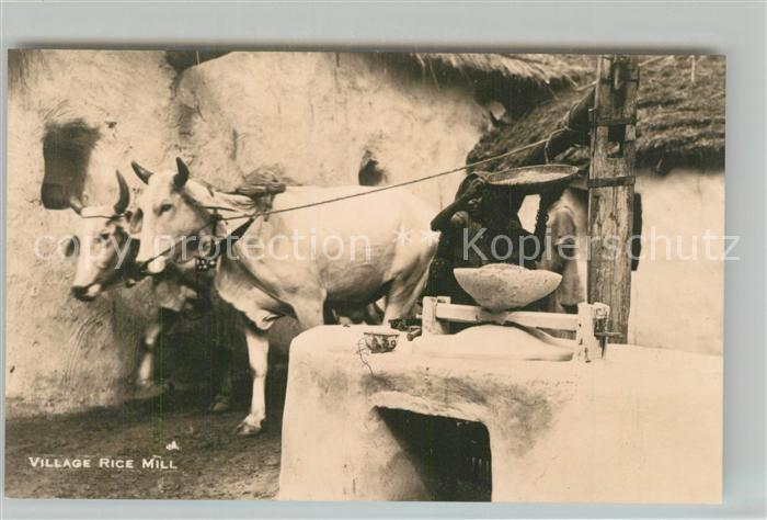 AK / Ansichtskarte Kuehe Indien Village Rice Mill  Kuehe