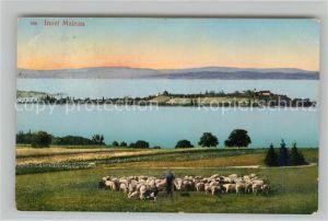 AK / Ansichtskarte Insel_Mainau Panorama mit Schafherde Insel Mainau