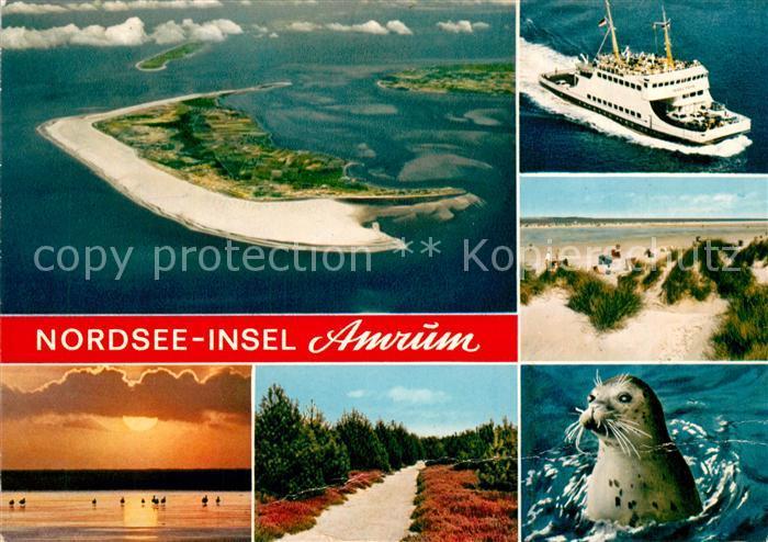 AK / Ansichtskarte Amrum Nordseeinsel Faehre Fliegeraufnahme Duene Seehund Heidelandschaft Sonnenuntergang am Meer Amrum